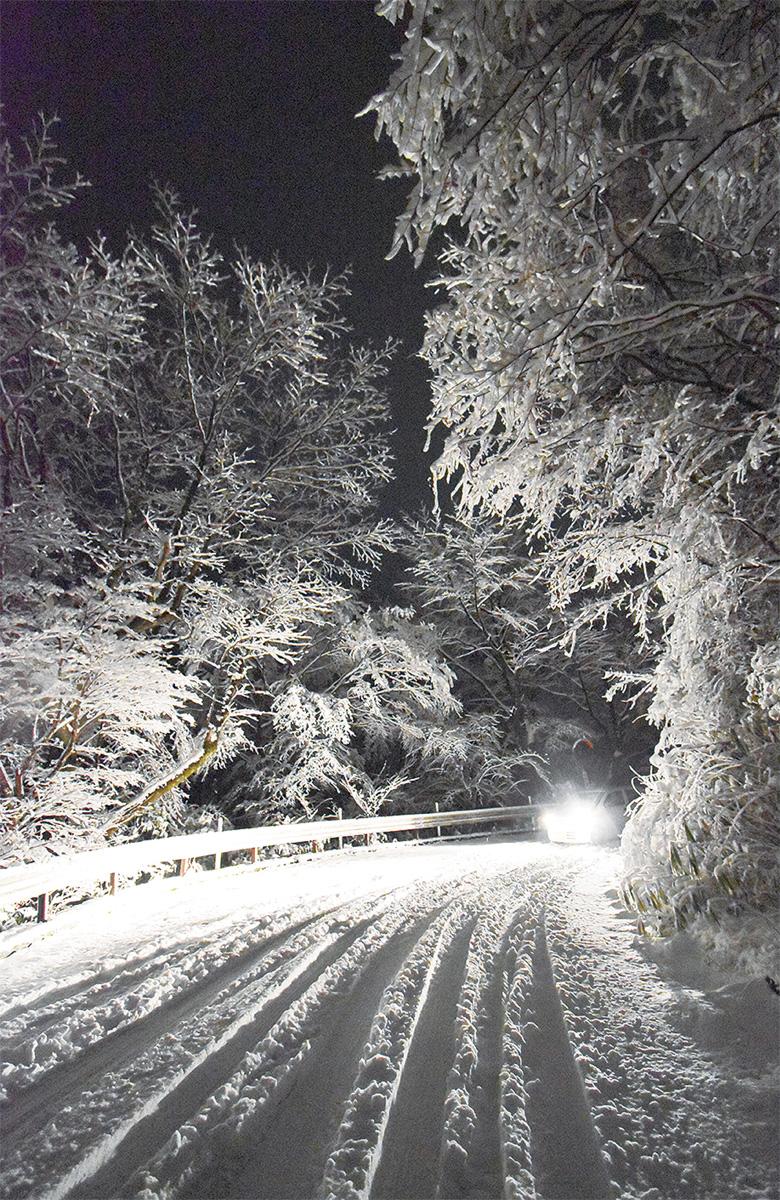 樹から雪「ドスン」