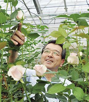 バラの生育状況を確認する和田部長