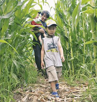背丈を超えるトウモロコシの中を探検