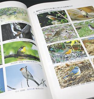 会員が撮影した野鳥のカラー写真
