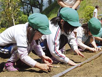 種を花壇に植えていく園児ら