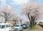 「はだの桜みち」に決定