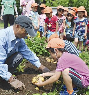 大庭さん(左)と一緒にジャガイモを掘る園児ら