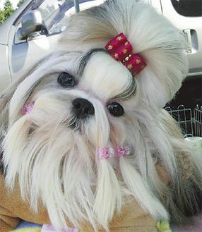 愛犬がショーのスターに
