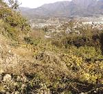 整備前の土地(撮影は2013年12月)