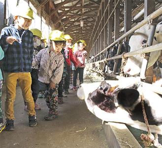 柵から顔を出す牛に驚く園児ら