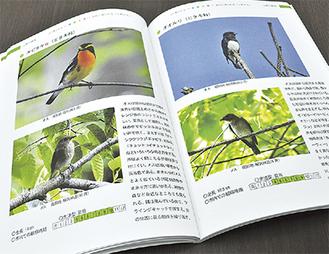 『新訂版 秦野の野鳥』秦野市内で観察できる野鳥がカラー写真付きで掲載されている。