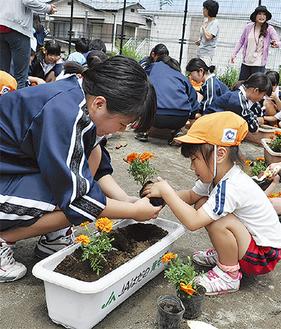 中学生と園児が協力して花を植えた