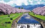 水無川両岸に桜が咲くイメージ図