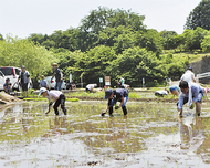 耕作放棄地活用し米作り