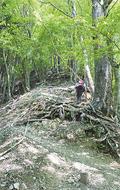 ブナの自然林お薦め国有林に