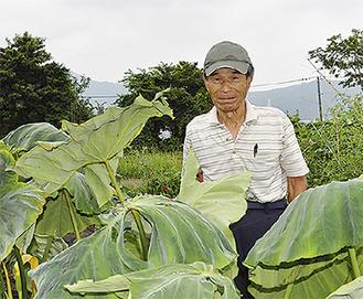 杉原さんとサトイモ
