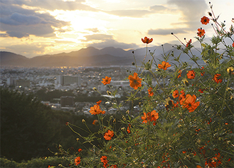 弘法山の車道から眺める夕焼け空と秦野市街地