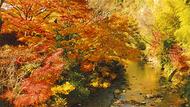 神奈川・静岡・千葉  この秋出かけたい場所