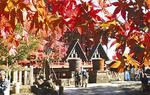 紅葉の大山阿夫利神社(下社)