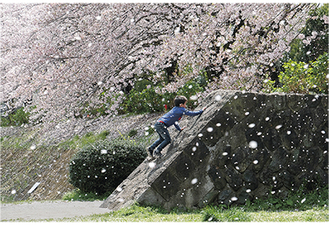 最優秀作品である推薦を受賞した奈良さんの作品「桜吹雪舞う」