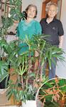 二度目の開花を迎えた観音竹と重田夫妻
