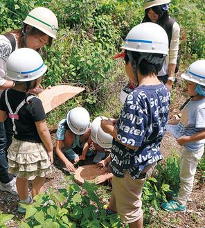切られたばかりの木に触れ感触を確かめる参加者