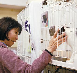 保護されている猫と触れ合う参加者
