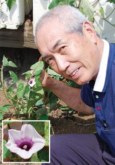 サツマイモの花と稲本さん