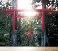 天津神社 西向きの謎に迫る