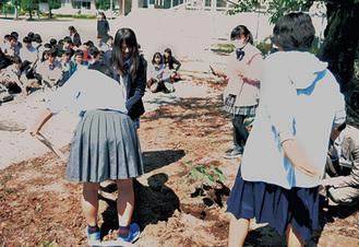 被爆アオギリ二世を植樹する生徒