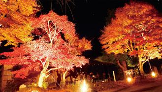 ライトアップされる緑水庵の紅葉
