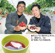 いちごの和紅茶 開発