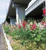 高架下に花の彩りを