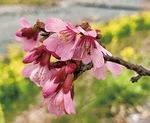 下向きに咲く花が特徴