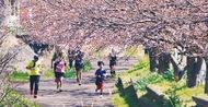 秦野の自然を走って花見