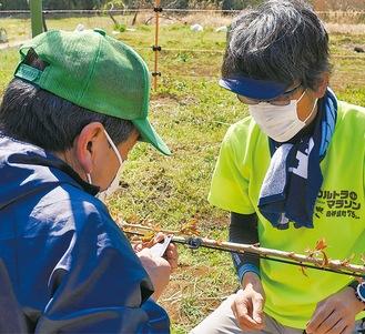 樹木の表皮を削って接木をするメンバー