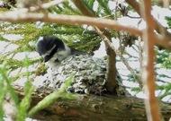 県内で初の営巣確認
