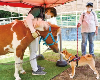 ドッグランに遊びに来た犬が、興味津々にトムと交流