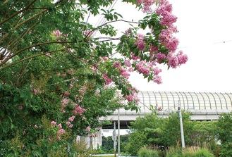 美しいピンクが特徴的な花が茂るように咲いている