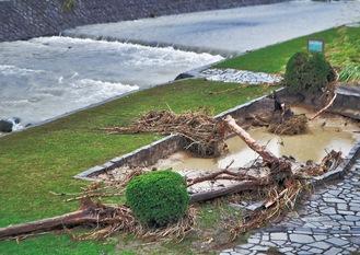 昨年の台風19号で増水し流木が残る水無川(昨年10月撮影)