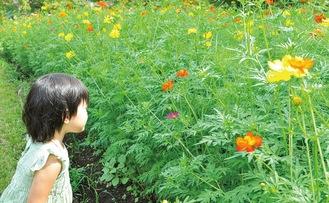 花を見つめる来園した子ども=9月17日撮影