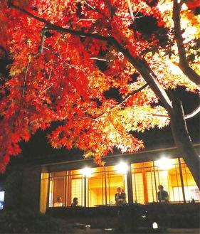 昨年のライトアップの様子=戸川公園提供