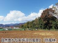矢坪沢の伐採をやめ、「自然公園づくり」を!