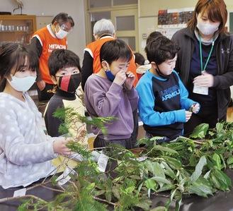 本物の植物に触れるなど五感を使い学習
