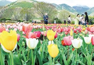 鮮やかに咲いている=3月29日撮影
