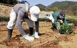 地域の人たちが幼木定植に協力