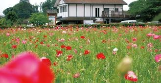 赤やピンク、白い花が一面に咲く(5月29日撮影)