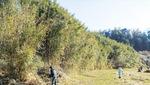 藪化した耕作放棄地を地権者と交渉し伐採