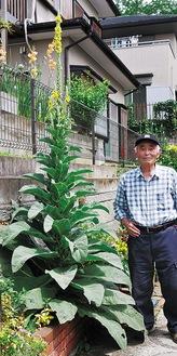 木澤さんの身長を超える高さに成長