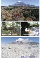 富士の巨樹と森の四季