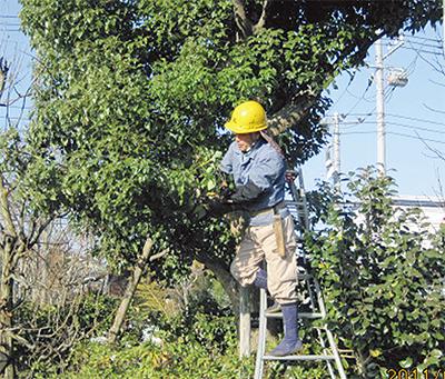 保健福祉センターの植木を剪定
