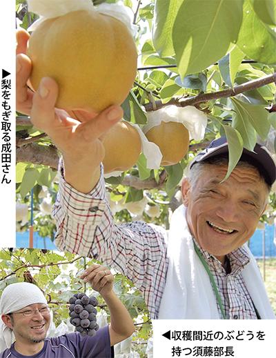 梨&ぶどう出荷最盛期