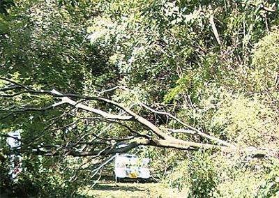 暴風で倒木相次ぐ