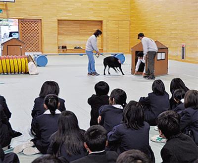 盲導犬など福祉を学ぶ